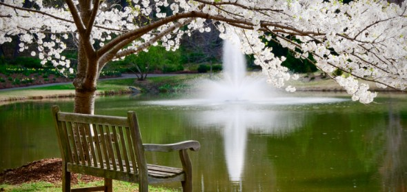 Park bench in tranquil scene by a pond